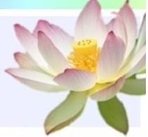 Thriving-Baby-Boomers - Lotus Logo