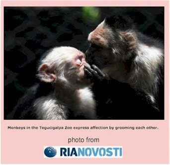 Thriving-Baby-Boomers - Touch - Monkeys expressing affection while grooming each other.