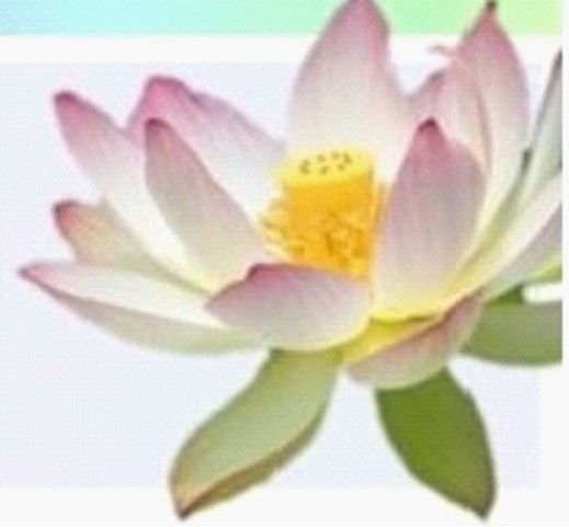 Thriving-Baby-Boomers Lotus